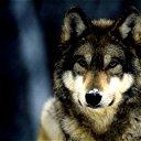Меченый Волк