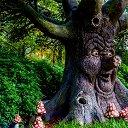 Дуб Дубом, Quercus Robur